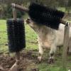 Busy-Bee-Brushware-Cattle-Brush