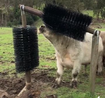 BY POPULAR DEMAND - CATTLE BRUSH - buy 2 or more for 10% discount
